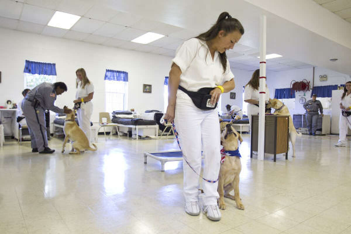 Leslie Gaddy, an inmate in the Crain Prison Unit, works with Tank, a Labrador, that is a service animal for wounded veterans.