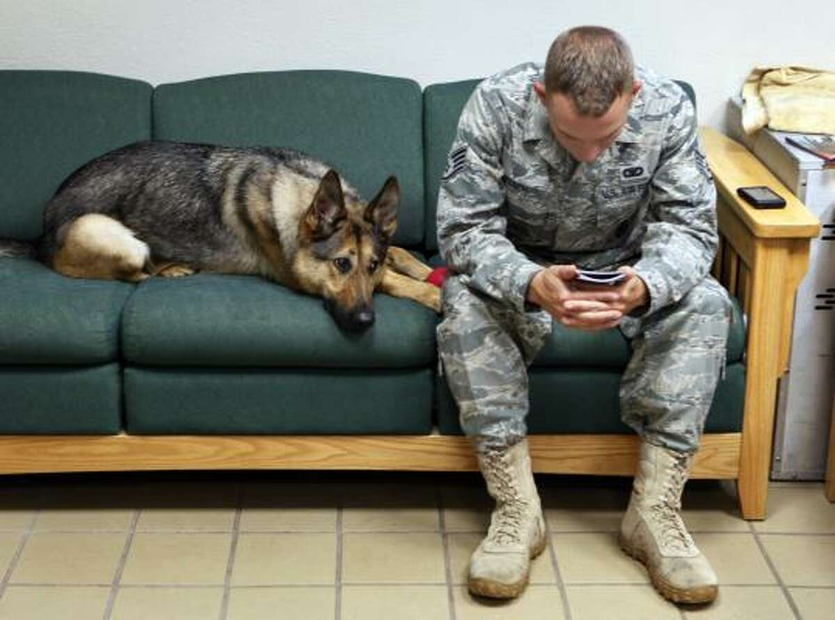 In this photo taken Thursday, July 29, 2010, Gina, a highly trained bomb-sniffing dog with the U.S. military, joins Staff Sgt. Chris Kench on a sofa at the kennel at Peterson Air Force Base in Colorado Springs. Gina was a playful 2-year-old German shepherd when she went to Iraq but months of door-to-door searches and noisy explosions left her cowering and fearful. After she came home to Peterson Air Force Base in June 2009, a military veterinarian diagnosed her with post-traumatic stress disorder.