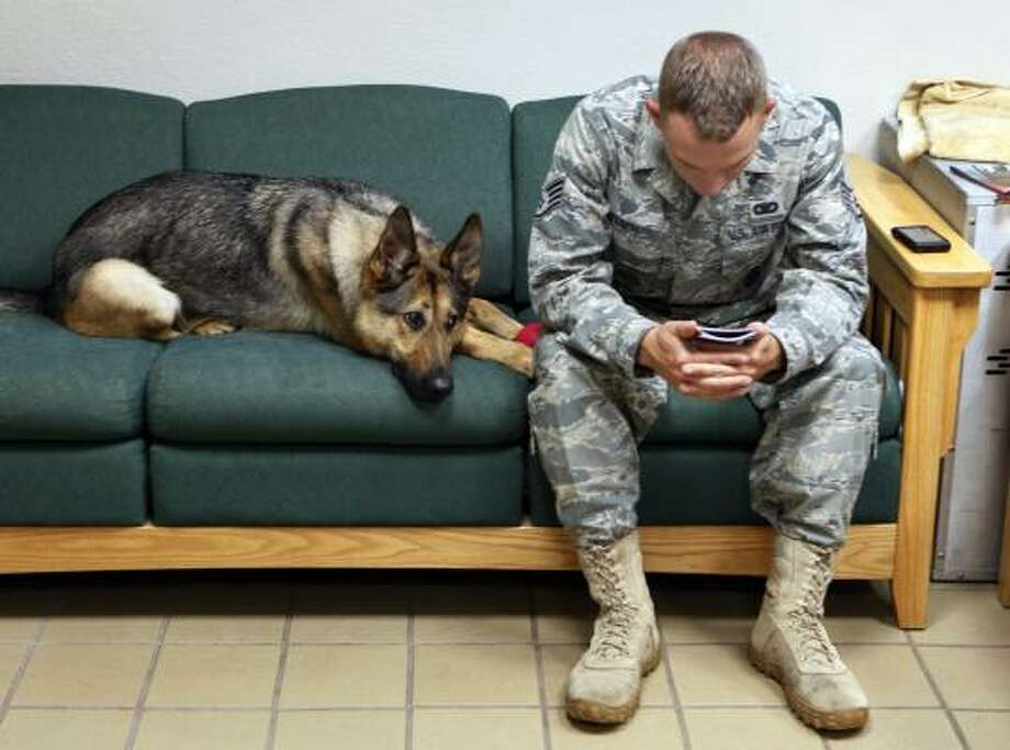 In this photo taken Thursday, July 29, 2010, Gina, a highly trained bomb-sniffing dog with the U.S. military, joins  Staff Sgt. Chris Kench on a sofa at the kennel at Peterson Air Force Base in Colorado Springs. Gina was a playful 2-year-old German shepherd when she went to Iraq but months of door-to-door searches and noisy explosions left her cowering and fearful. After she came home to Peterson Air Force Base in June 2009, a military veterinarian diagnosed her with post-traumatic stress disorder. Photo: Ed Andrieski, AP