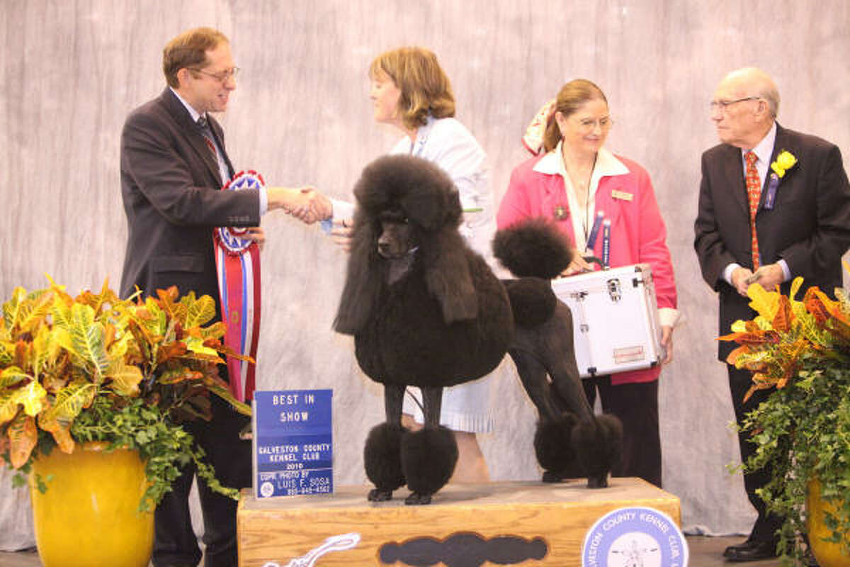 Judge Eric J. Ringle congratulates Sarah Riedl and French poodle CH Dawin Spitfire.
