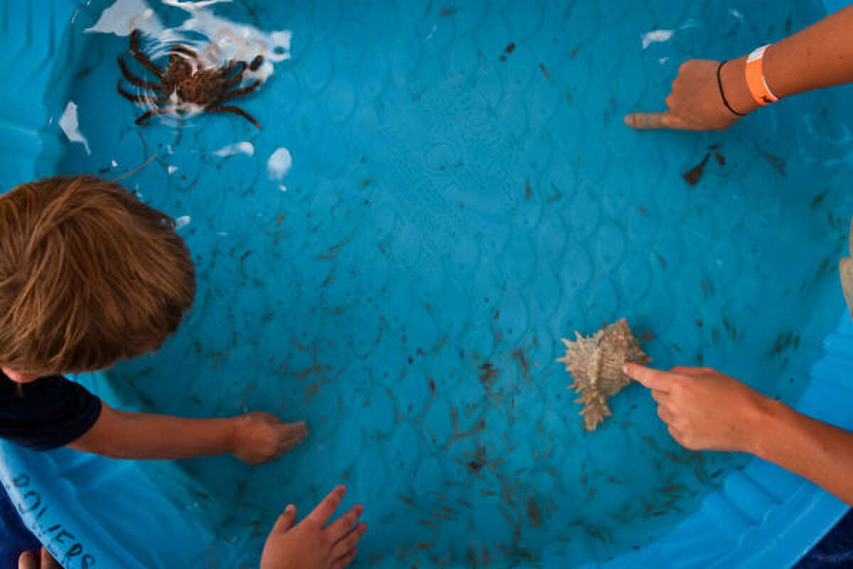 Children get a hands on demonstration of sea life during the