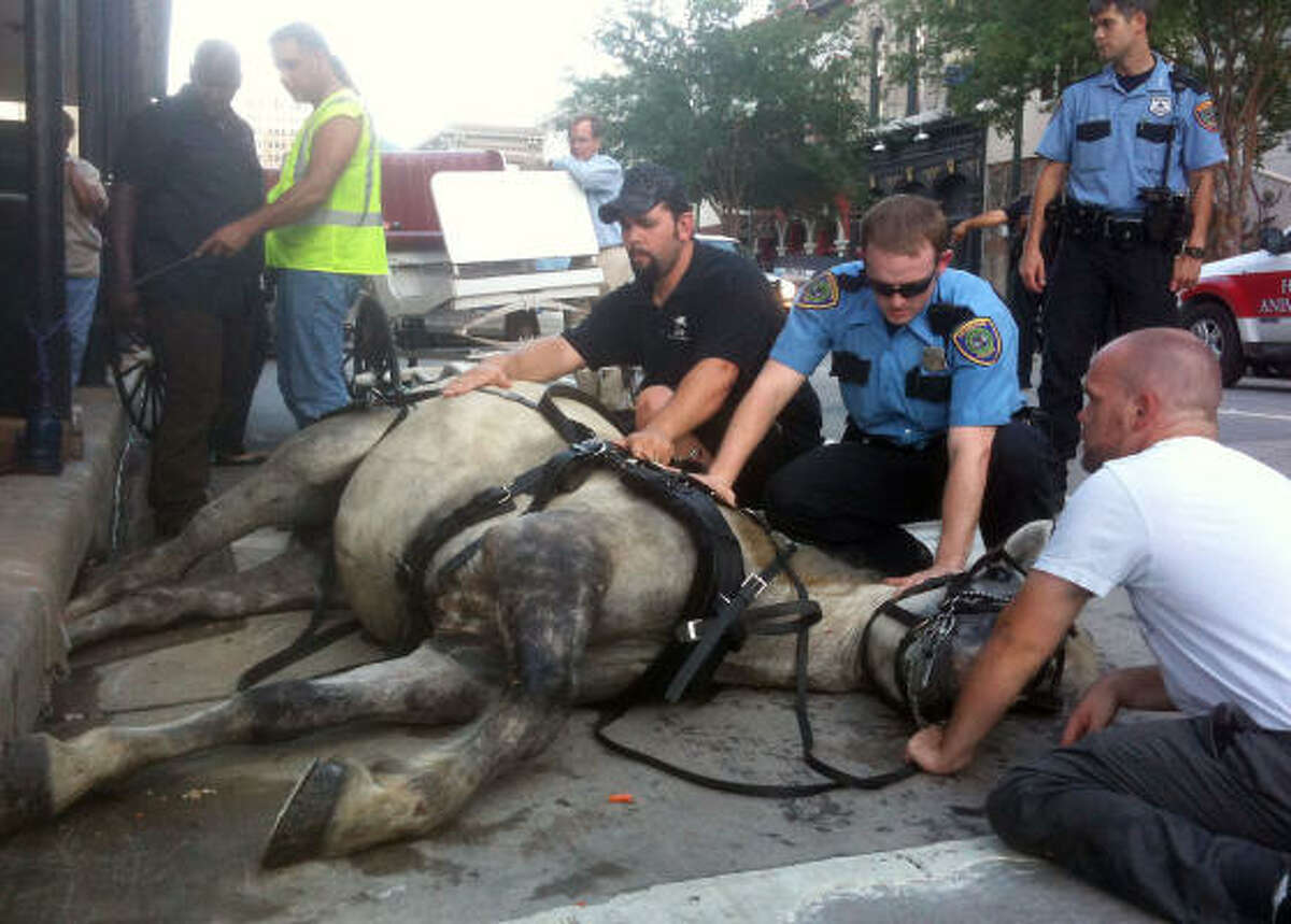 Dolly was sedated during the rescue effort. HPD, Houston SPCA, constables and the Harris County Sheriff's Office all worked to free the horse, which took passengers on downtown carriage rides.