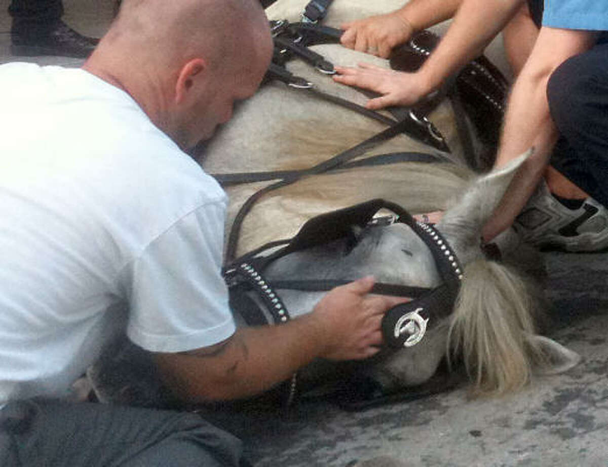 The carriage horse driver, who did not give his name, comforts Dolly during the rescue effort.