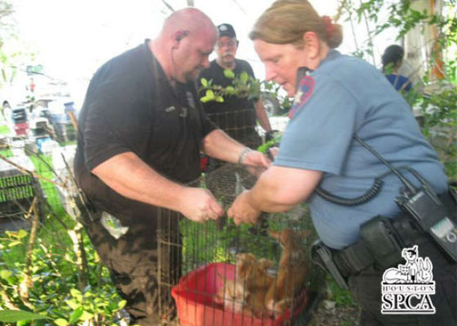 Found animals are transported from the premises. Photo: HSPCA