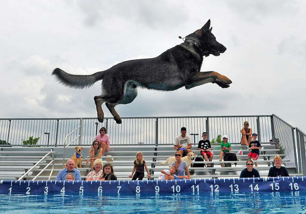 Douglas County Sheriffs Department K-9 officer Ace leaps into the pool during the Dixie Dock Dogs Great American Dawg Jump at Oconee Veteran's Park Friday in Oconee County, Ga. near Athens.