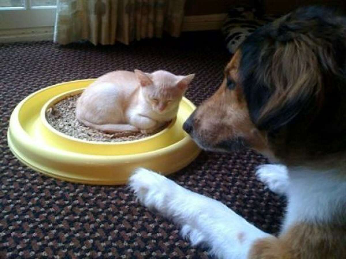 Jake and Riesen Share your pets' photos.