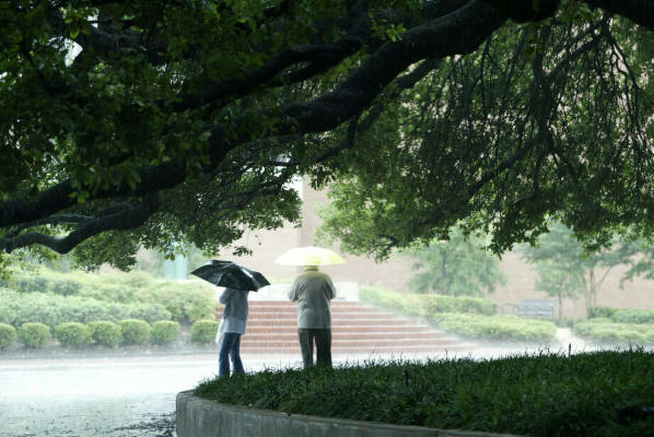 Plant database: Live oak, Quercus virginianaStory: Top 10 trees to survive hurricanes Photo: Buster Dean, Chronicle