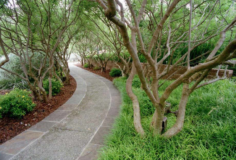 Plant database: Vitex or chaste tree Vitex agnus castusStory: Top 10 trees to survive hurricanes Photo: John Everett, Chronicle
