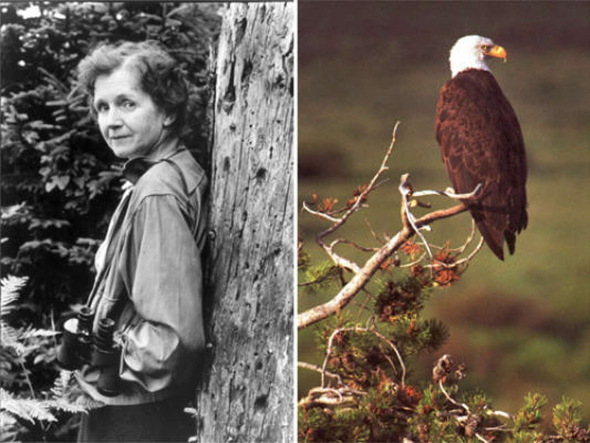 Rachel Carson, left, wrote the book 'Silent Spring,' which exposed the chemical industry's unregulated use of DDT and other pesticides. Bald eagles were threatened almost to extinction because of DDT.