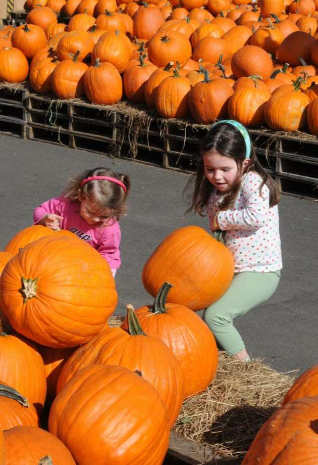 From Left, sisters Flora Motta, 2, and Giovanna Motta,4, pick pumpkins in Stew Leonards in Danbury on Tuesday Oct. 6, 2009. Photo: Lisa Weir / The News-Times