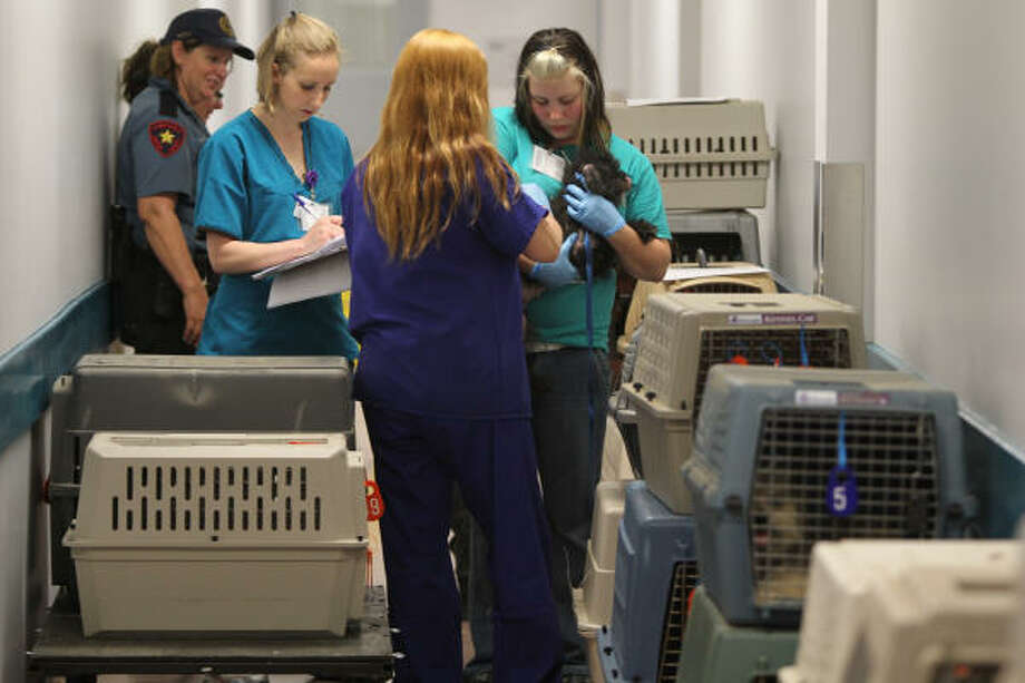 Houston SPCA animal care team member Sara Mock-Mason, facing, holds one of 161 dogs that were brought in get vaccinated by vet tech Elizabeth Hernandez Tuesday, June 8, 2010, in the Houston SPCA in Houston. Meera Nandlal, public relations manager SPCA, says the dogs came from a residential house, where four dogs were found in the freezer, that was ran as a dog breeding business. Photo: Nick De La Torre, Chronicle