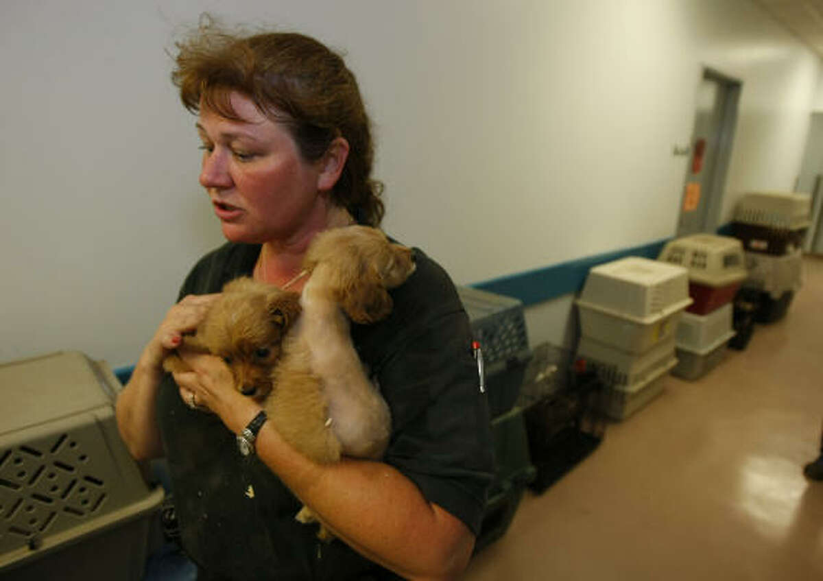 Houston SPCA investigator Trischia Price holds a couple of puppies, just some of the 161 dogs that were brought in to the Houston SPCA.