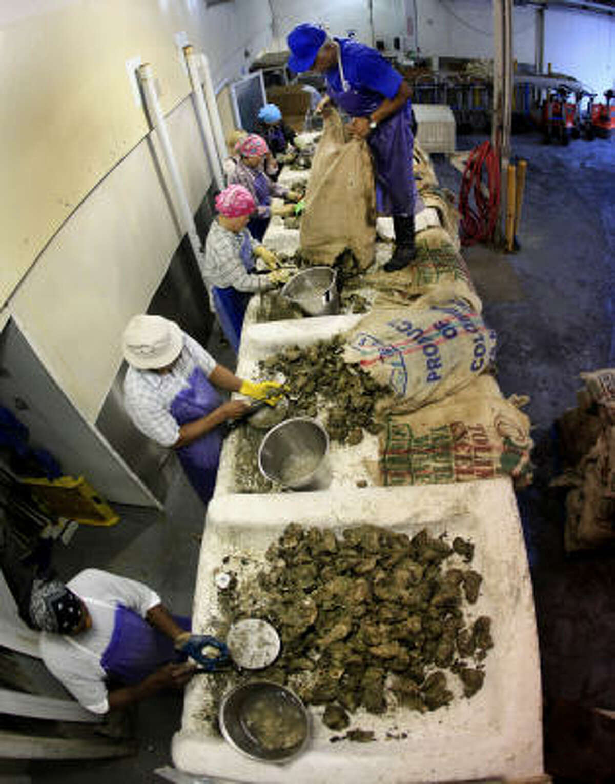 Workers shuck oysters at P&J Oyster Co., in New Orleans Thursday, June 10, 2010. Work is coming to a halt at the 134-year-old establishment after oyster beds were closed because of the Deepwater Horizon oil spill.