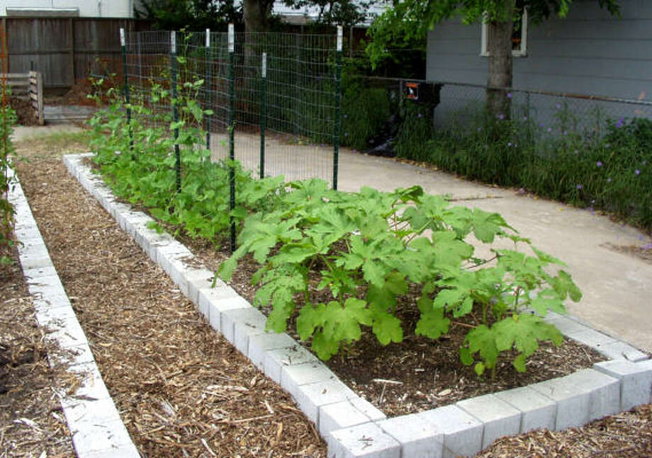 8 necessities for vegetable gardening Houston Chronicle