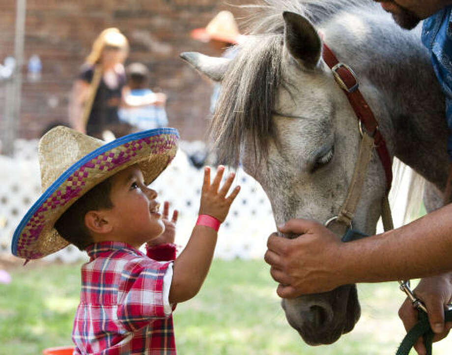 "Valentin Castaneda, 2, reaches up to pet a horse while celebrating the end of school with a ""Giant Friday Afternoon Fiesta"" at the Star of Hope Transitional Living Center.  As part of the Mission's Summer of Hope Campaign, school-aged children from the Star of Hope Transitional Living Center spent their first ""no school"" day jumping in moonwalks, eating cotton candy, fajitas and enjoying a carnival. ""This gives these families the type of memories that last a lifetime,"" said Elizabeth Hatler, manager of volunteer services for the Star of Hope. Photo: Brett Coomer, Chronicle"