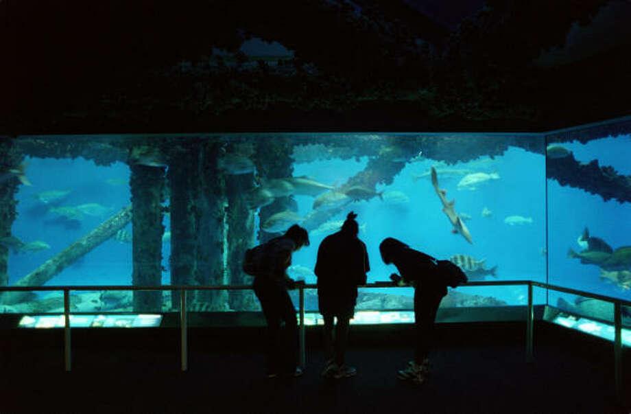 Corpus Christi attraction:Texas State Aquarium This aquarium features a 25-foot viewing window and a Deckside Dolphin Encounter. Photo: E. Joseph Deering, Chronicle