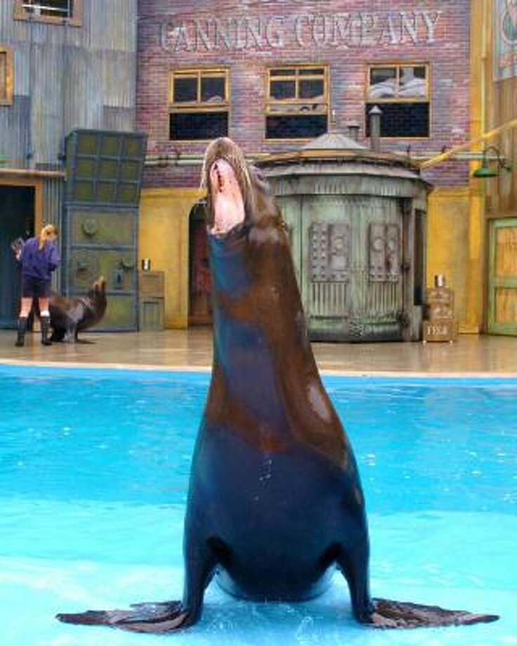 San Antonio attraction: SeaWorld