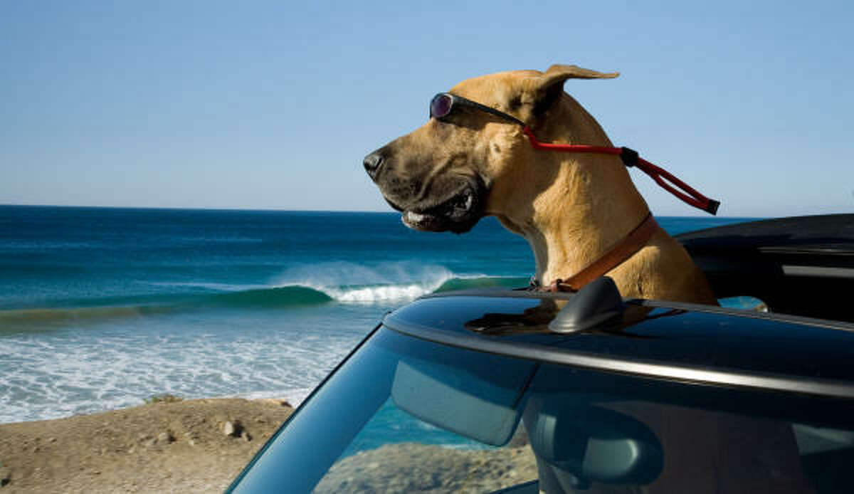 Marmaduke IMDB.com: A suburban family moves to a new neighborhood with their large yet lovable Great Dane, who has a tendency to wreak havoc in his own oblivious way.Release date: June 4