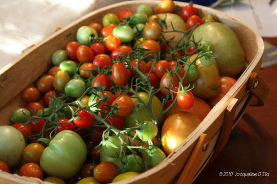 A basket of freshly picked tomatoes. Photo: Jdelia, Chron.commons