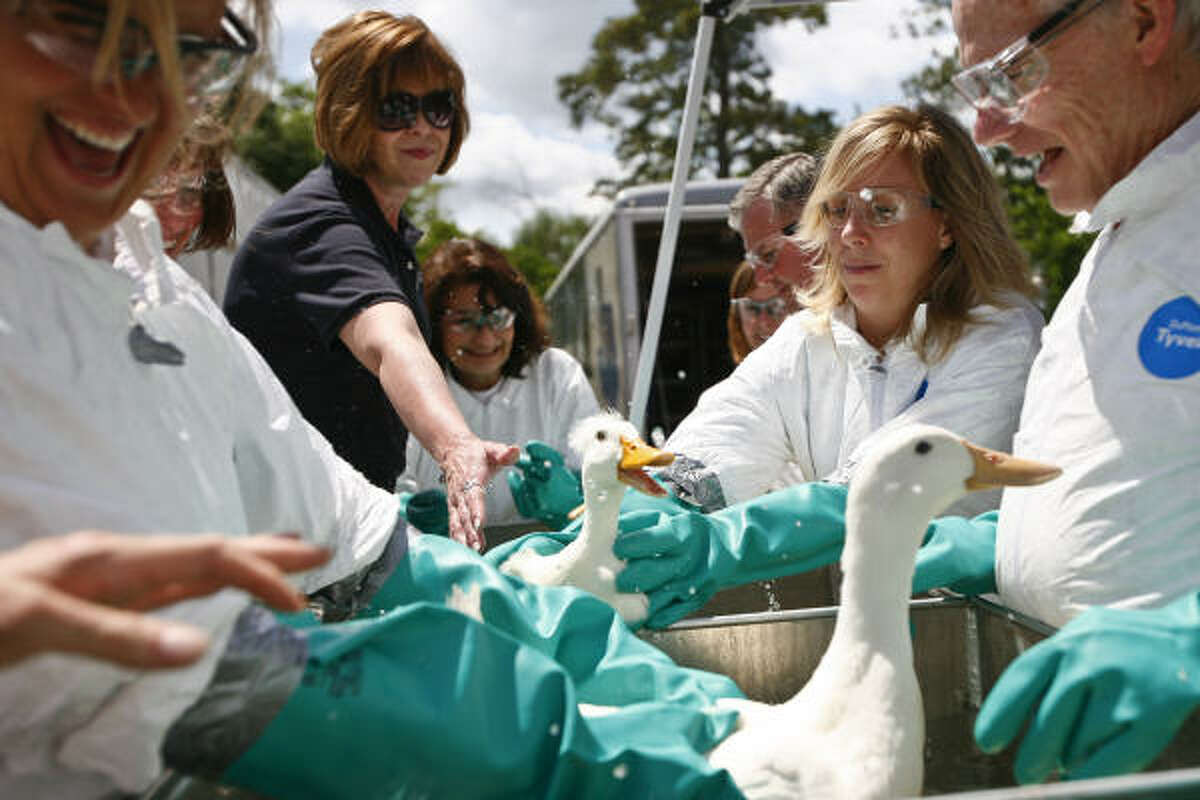 Participants learn how to care for and clean a contaminated bird.