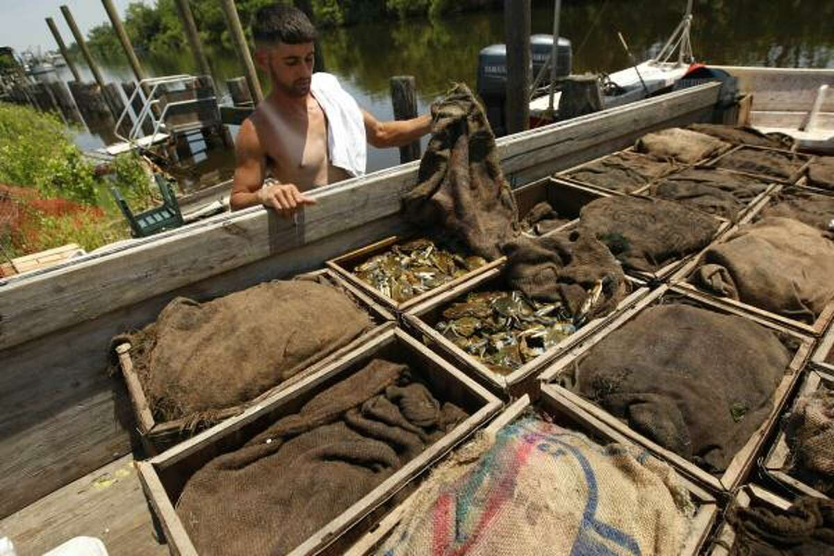 Matthew Martinez shows off his crab haul on a dock in Hopedale, La., on May 17. Many of the waters in the area have been shut to fishing and oyster harvesting due to the Deepwater Horizon oil spill.