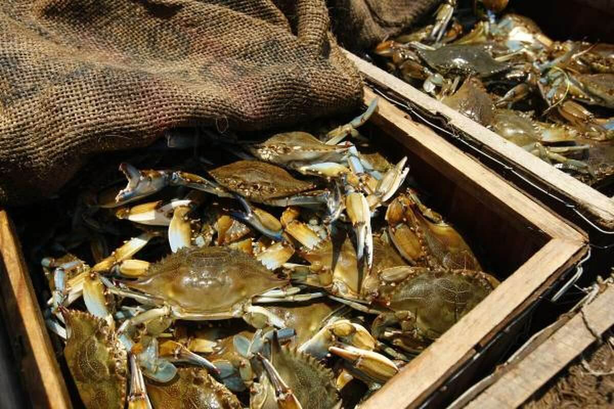 A crabber shows off his haul in Hopedale, La., on May 17.