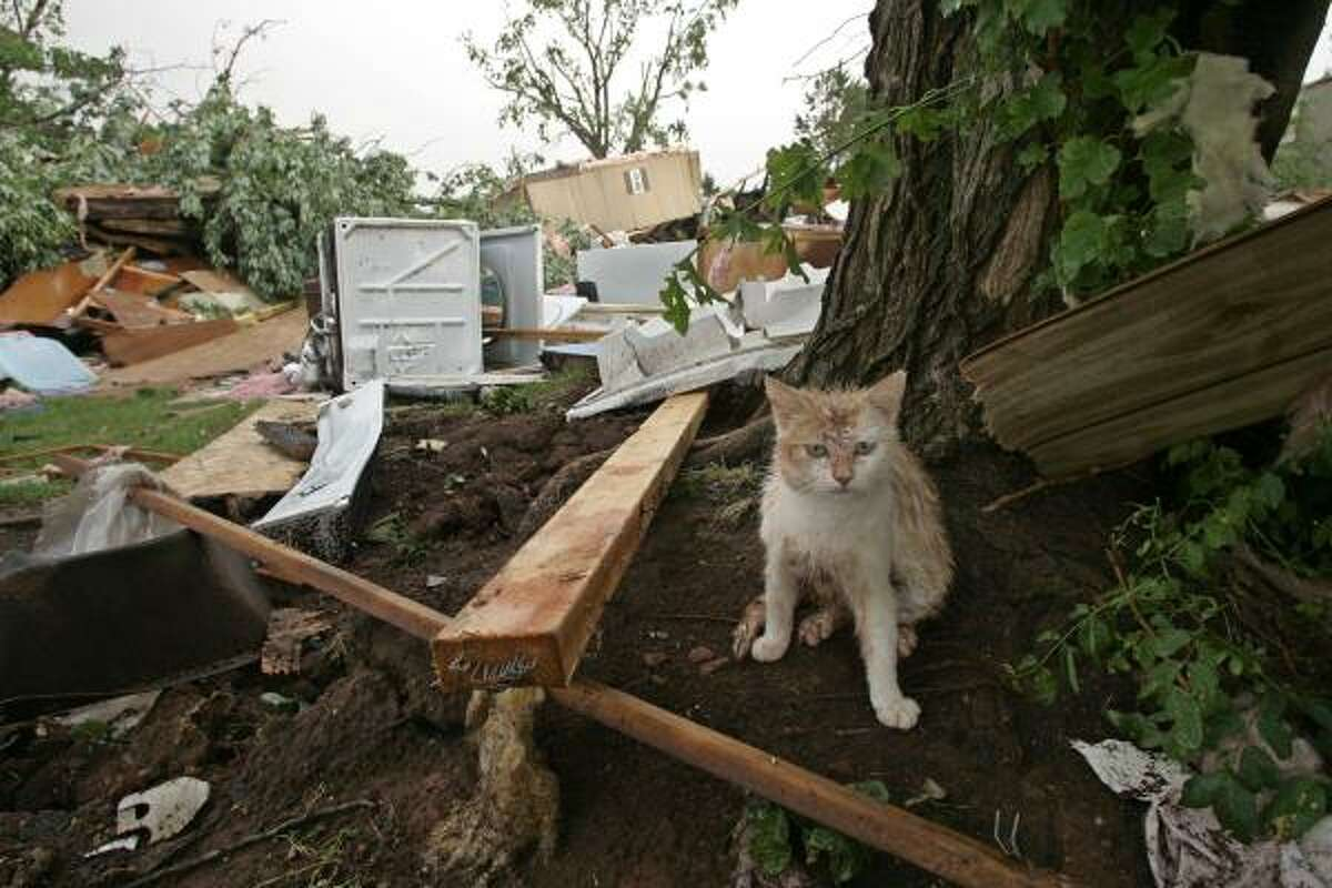 In this May 10, 2010 photo, a muddy kitten takes cover next to a tree after a tornado came through the mobile home community of Prairie Creek Village in Slaughterville, Okla., flattening several homes. The violent storms killed five people and injured dozens more.