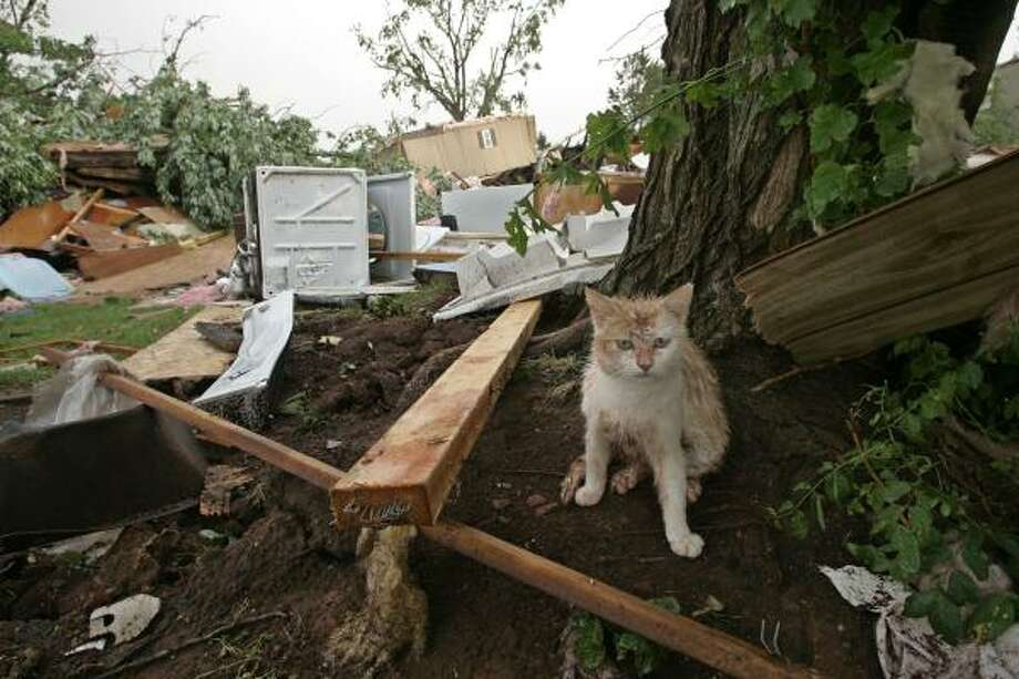 In this May 10, 2010 photo, a muddy kitten takes cover next to a tree after a tornado came through the mobile home community of Prairie Creek Village in Slaughterville, Okla., flattening several homes. The violent storms killed five people and injured dozens more. Photo: Sue Ogrocki, AP