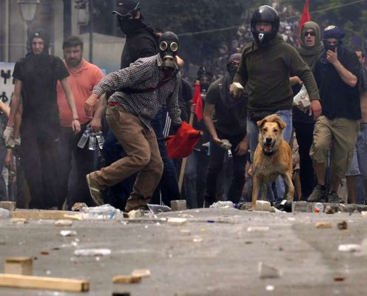 A dog watches demonstrators throw stones at the police in central Athens May 5. AP photos show at least two different dogs mingling with protesters and police.