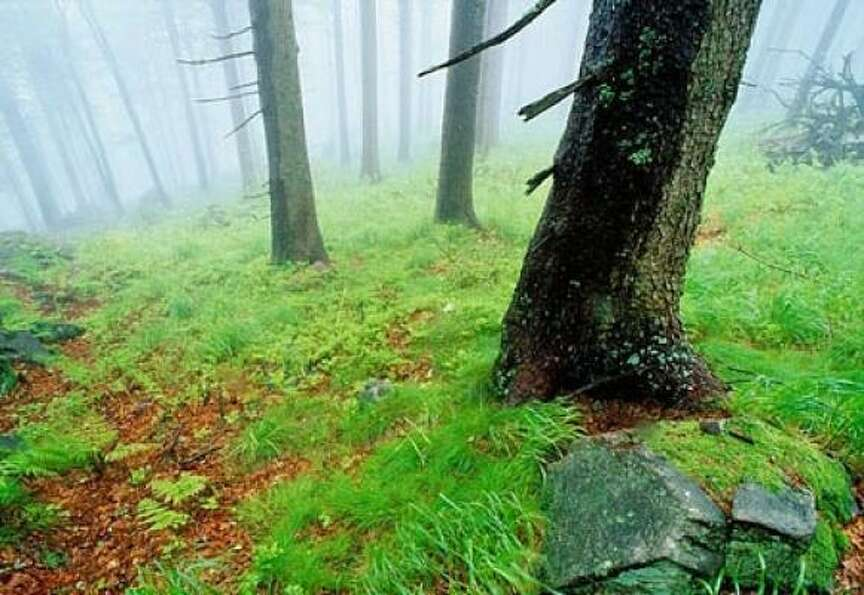 Germany's Black Forest takes its name from the dark, dense stands of spruce and fir th