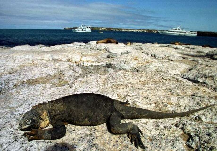 The Galapagos Islands have been described as one of the most unique, scientifically important and biologically outstanding areas on earth. This volcanic islands are home to many noteworthy species of flora and fauna, including flamingos, iguanas and giant tortoises. Photo: MARTIN BERNETTI, AFP/Getty Images