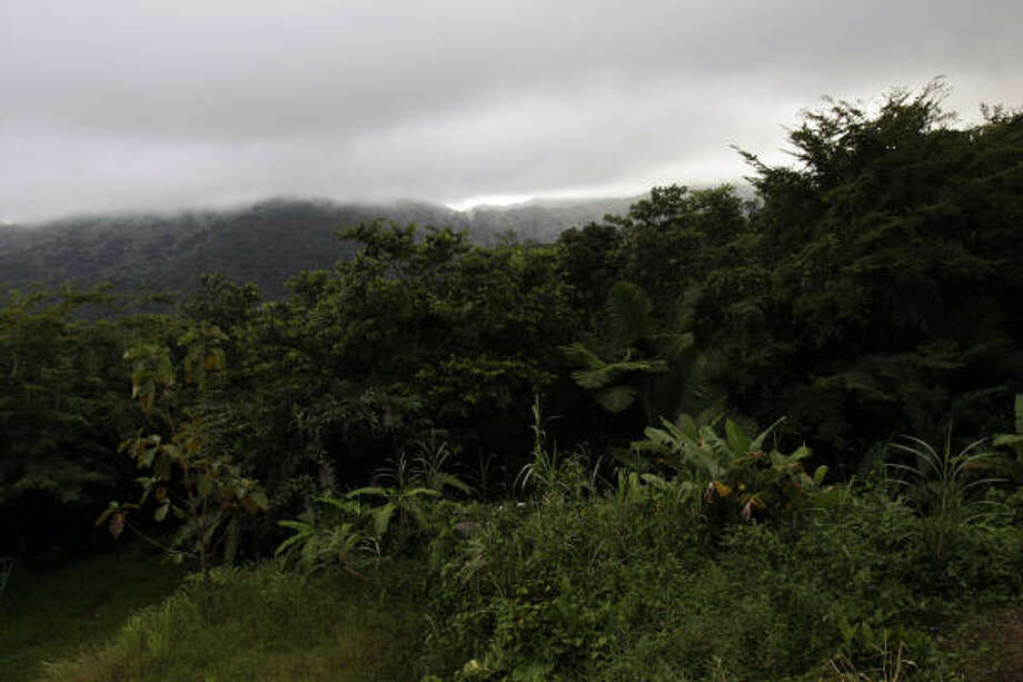 The mountain rain forest of El Yunque National Park in Puerto Rico also shares its name with the second-highest mountain peak in the forest. Photo: Andres Leighton, Associated Press