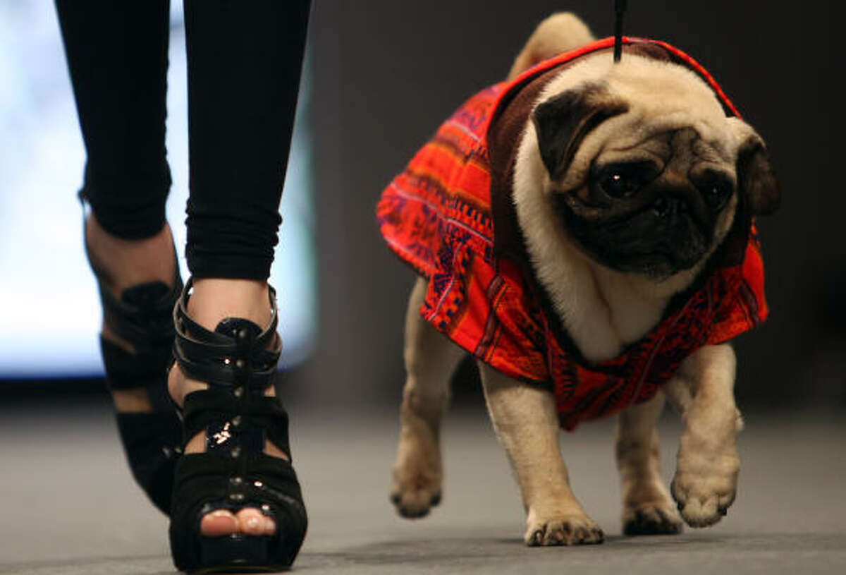 Dogs dominate the catwalk.