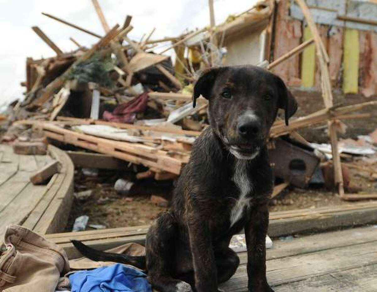 A puppy perks up after surviving a tornado that leveled a home in Franklin, Miss.