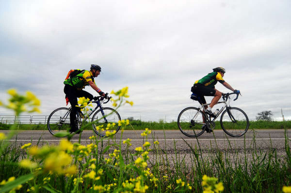 MS 150 riders cruise along FM 969 on Sunday.