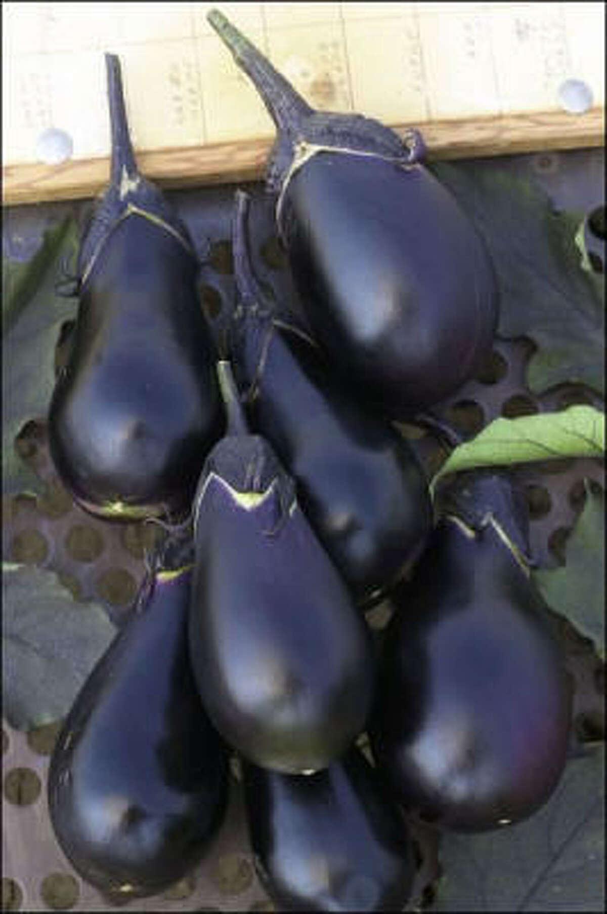'Black Egg' eggplant