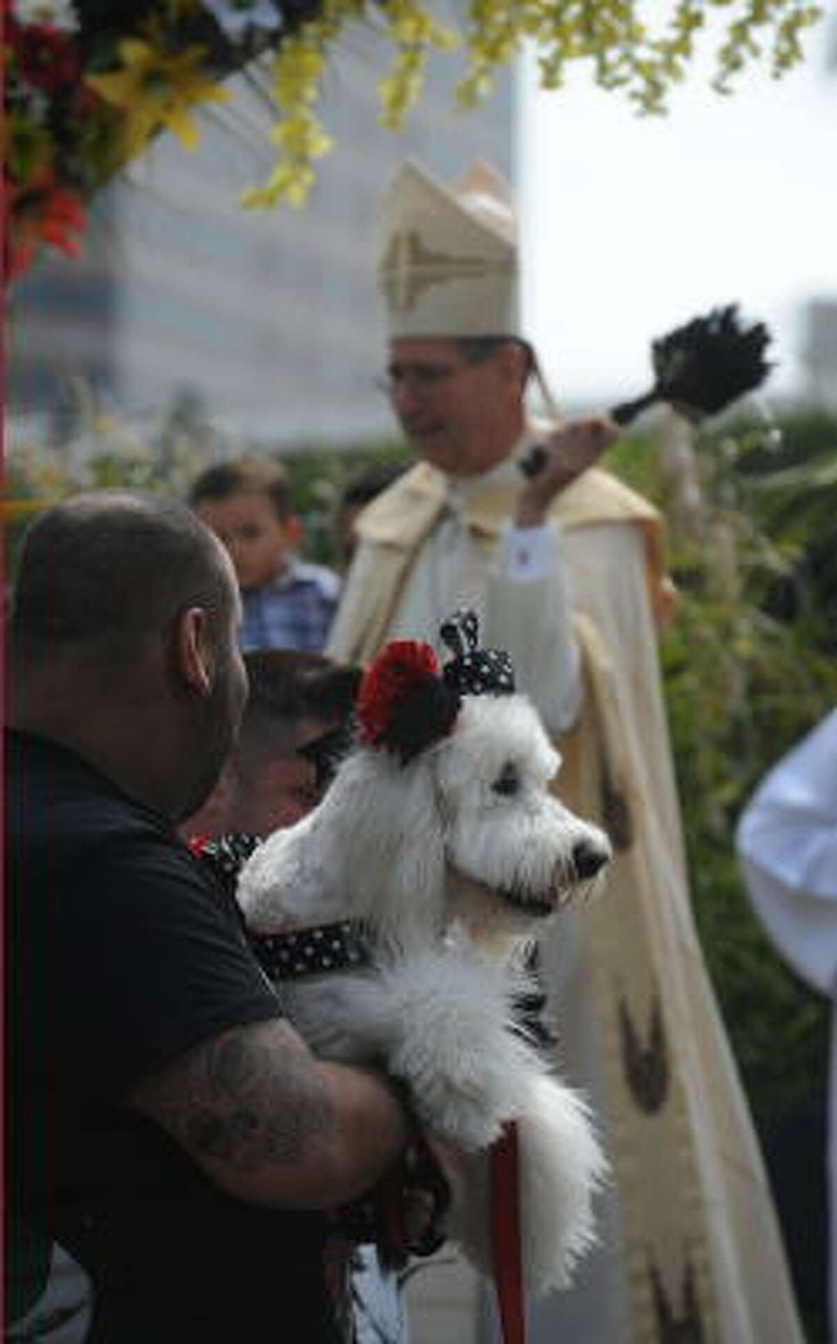 Cardinal Roger Mahony uses a brush to sprinkle passing animals with Holy Water at the Blessing of the Animals at Olvera Street in downtown Los Angeles Saturday.