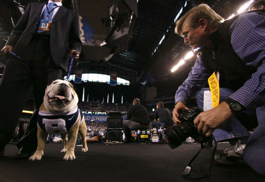 Blue II, a 6-year-old English bulldog, is the mascot for Butler Unversity, who will play Duke in the NCAA Finals. Photo: Karen Warren, Chronicle