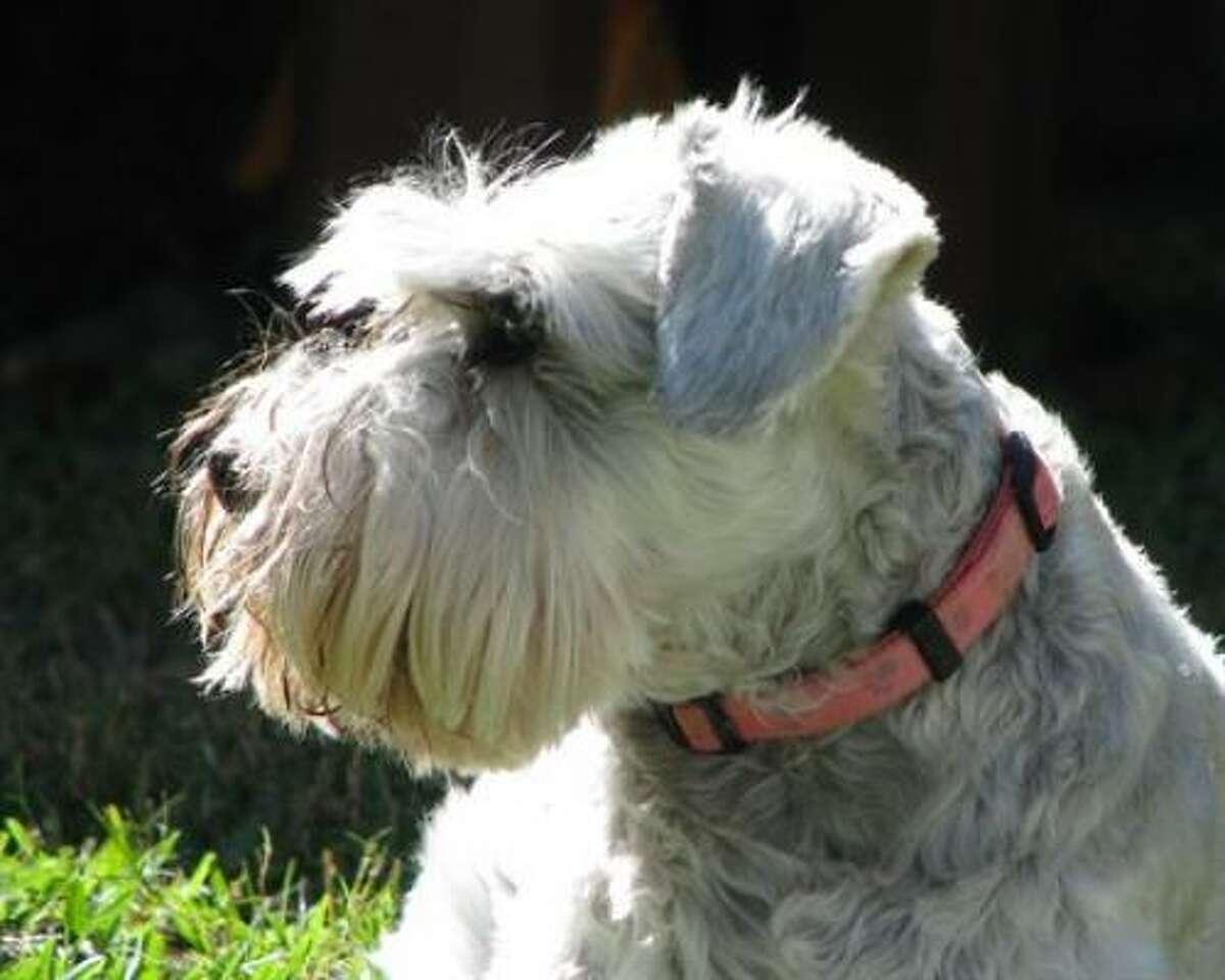 MillieDog Share your dog pics.