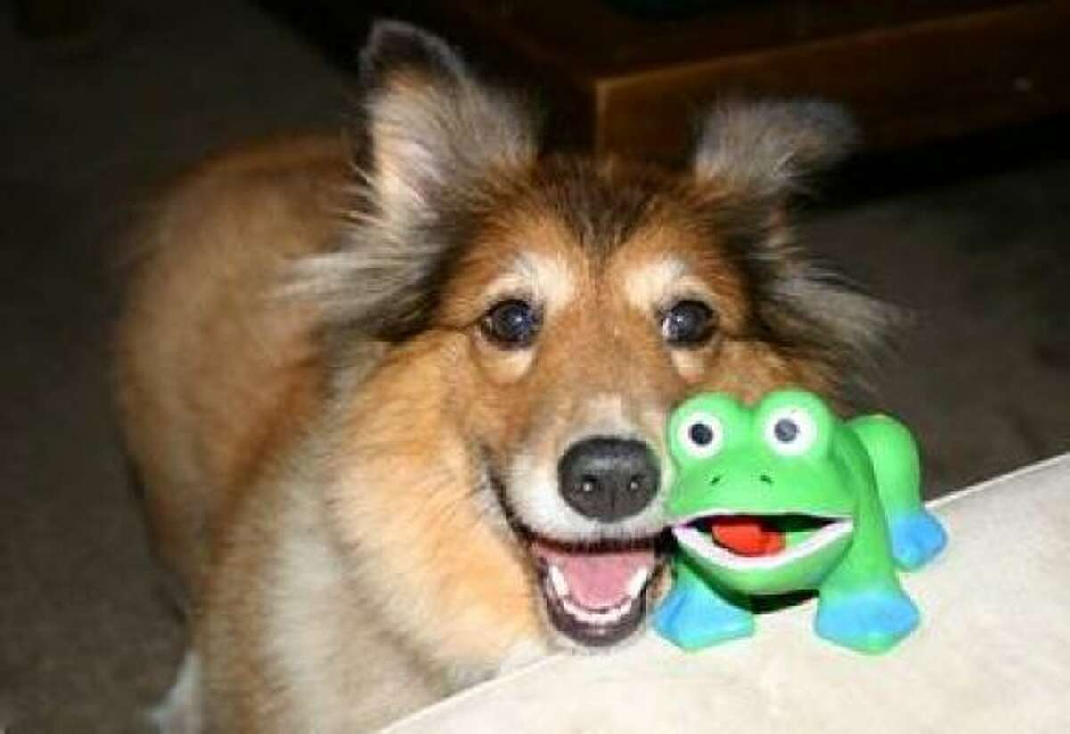 Smigen with frog toy No. 10 or maybe No. 11. Share your dog pics.