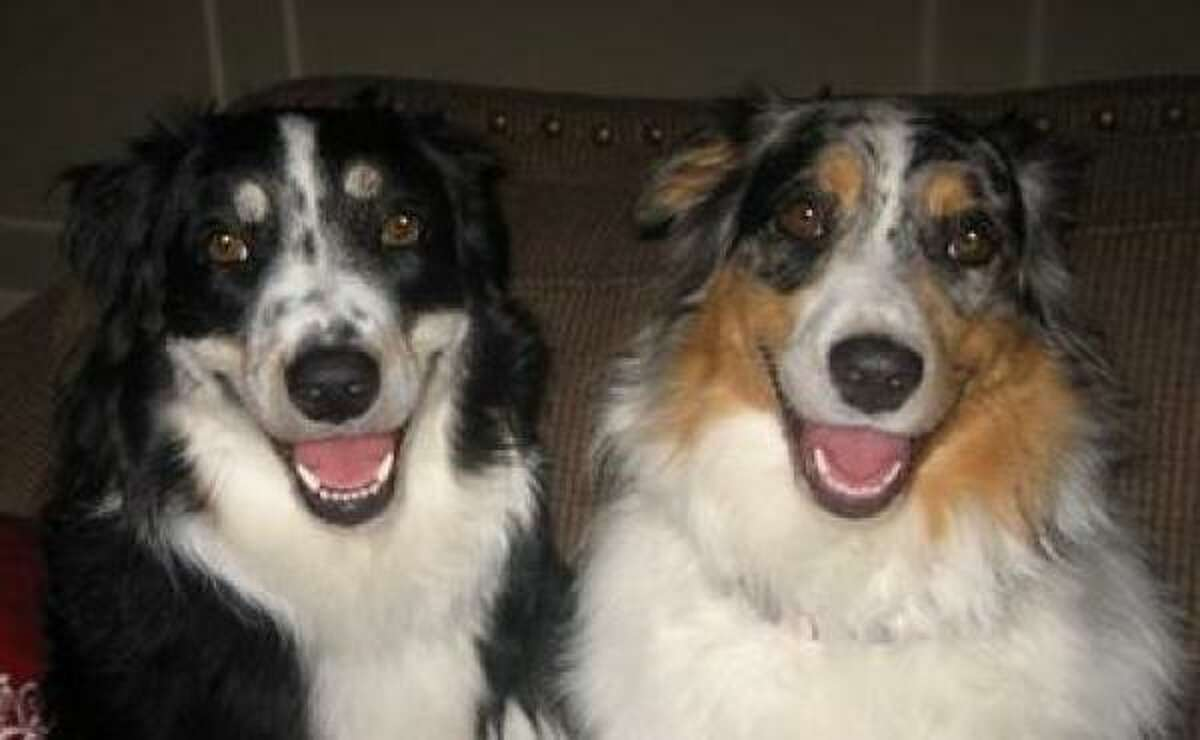 Chester and Annie Share your pets' photos.