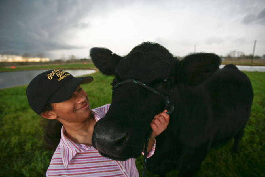 Domonique Goff, 17, and her heifer Marci. Photo: Michael Paulsen, Chronicle