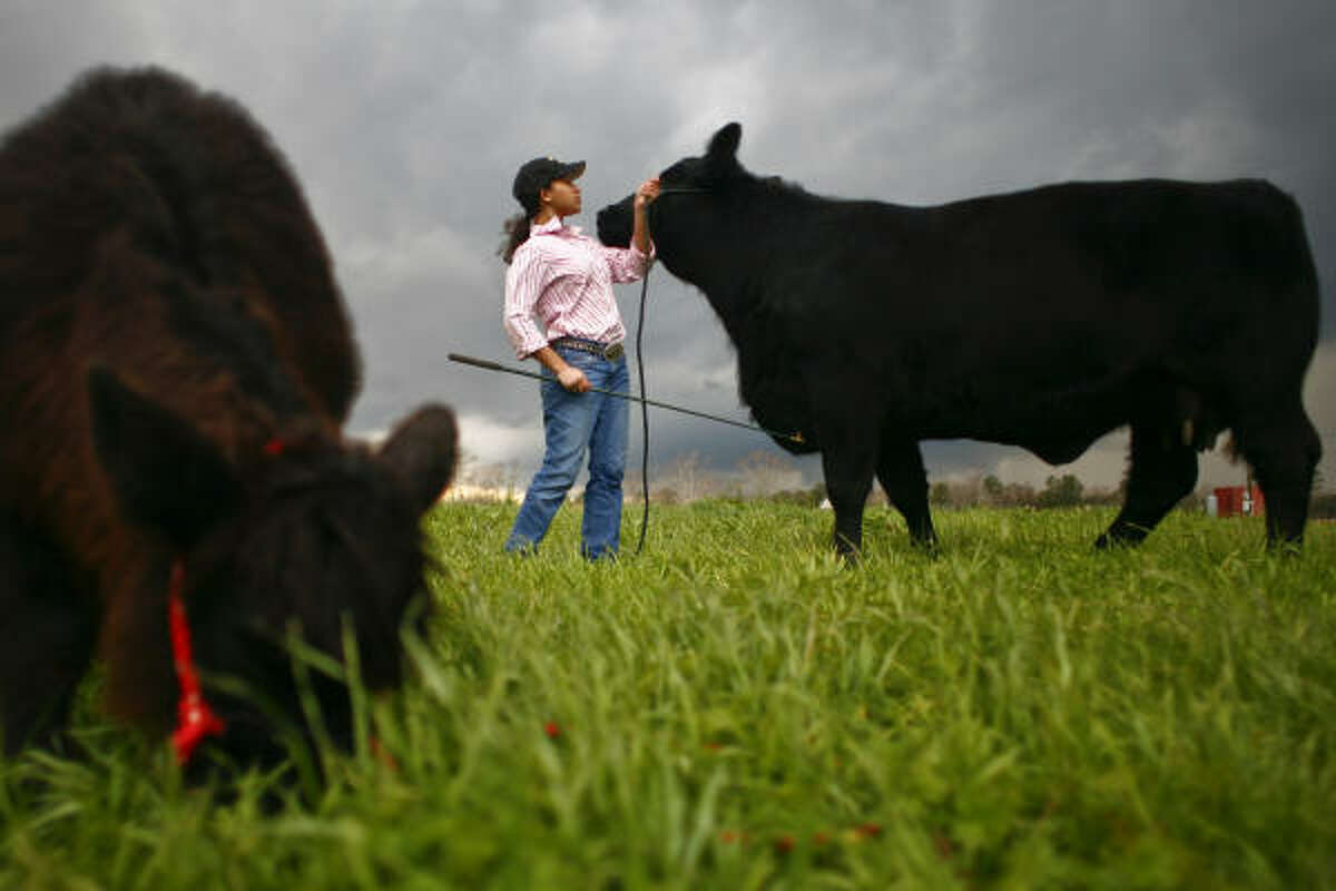 Domonique Goff, 17, stands beside Marci and her three-month-old calf, Joli.