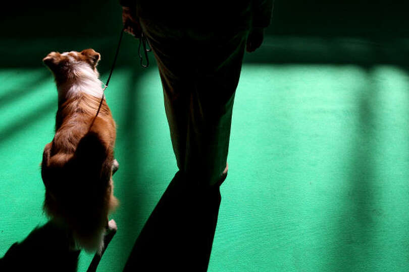 A dog and its owner take to the practice arena on the first day of the annual Crufts dog show at the