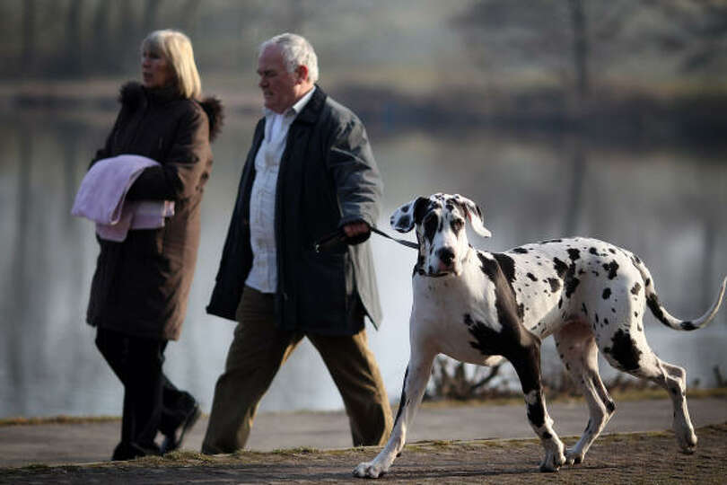 Dogs and their owners arrive for the first day of the annual Crufts dog show at the National Exhibit