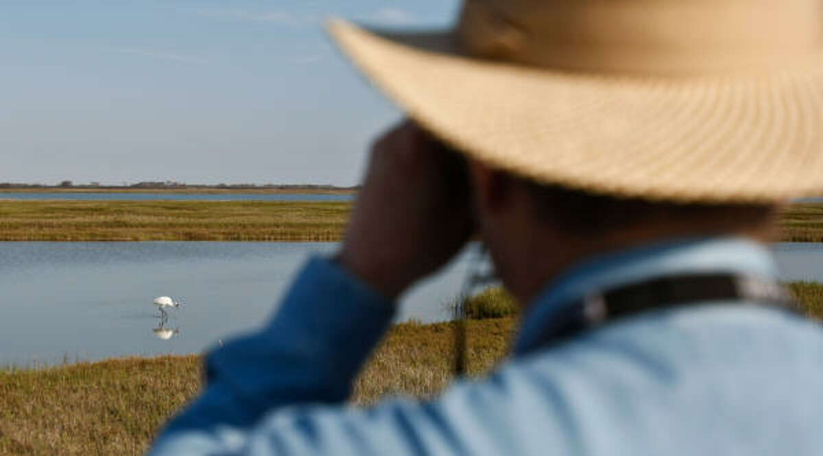 Bird watchers enjoy watching a pair of Whooping Cranes forage for foodin Fulton. It is a better situation for the Cranes to forage for food instead of fly long distances giving them the opportunity to fatten up for their trip back to Canada when winter comes to an end.