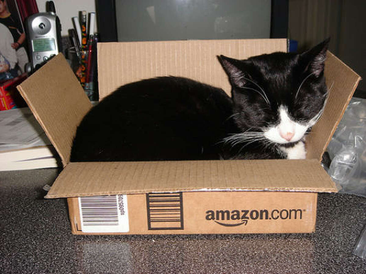 The cat fit in this box when the trip started. (Editor's note: Of couse, cats know that Amazon doesn't ship live animals, but don't tell dogs.) Upload photos of your cat in a box - or doing something else that's fun.