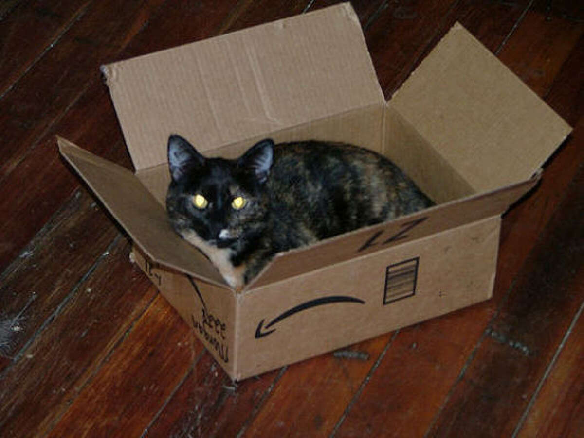 Cats with laser eyes are big sellers. Upload photos of your cat in a box - or doing something else that's fun.