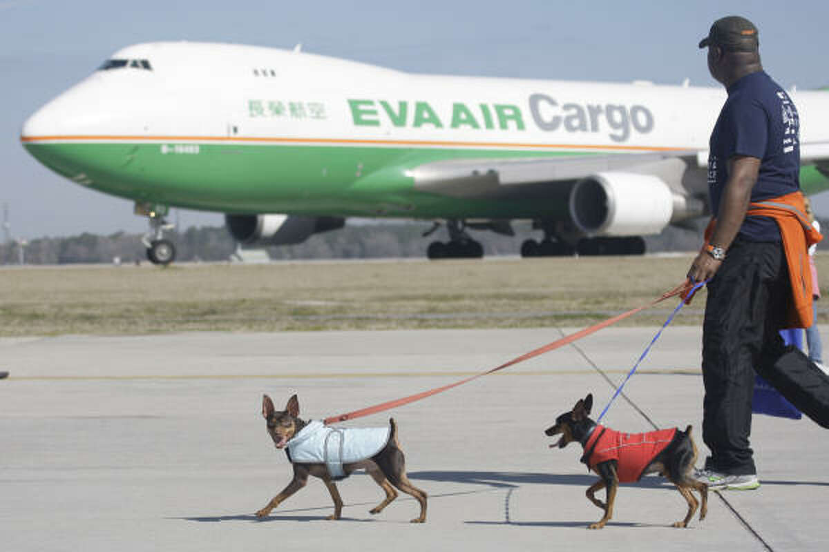Grady Wallace of Katy with miniature pinschers Chucho, left, and Benito, right, get a good view of a taxiing cargo plane during the 2010 Houston SPCA Mutt Strut and Runway Race at George Bush Intercontinental Airport. The event was a fundraiser for the SPCA.