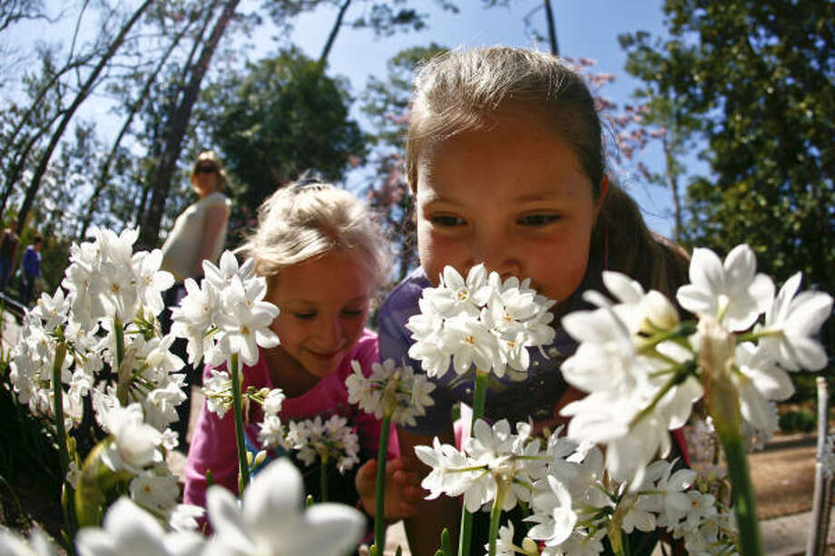 Amber Lester, 7, and her sister Krystal, 9, smell a grouping of flowers at the Bayou Bend Gardens during the Azalea Trail Home and Garden Tour.  The Azalea Trail is celebrating its 75th year and continues through Sunday. Photo: Michael Paulsen, Chronicle